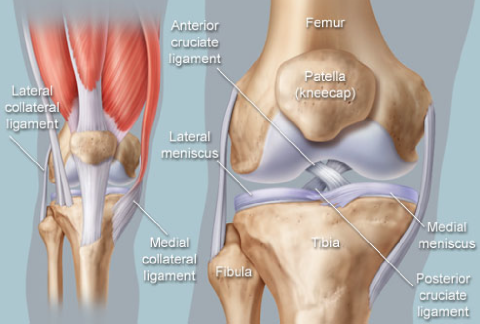 Dr William P Zink Md Knee Injuries Acl Dr William P Zink Md
